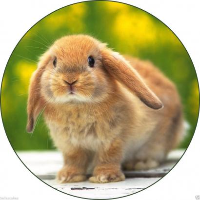 Jedlý papír králíček 2