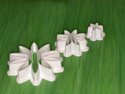Květina daisy