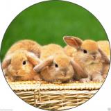 Jedlý papír králíčci
